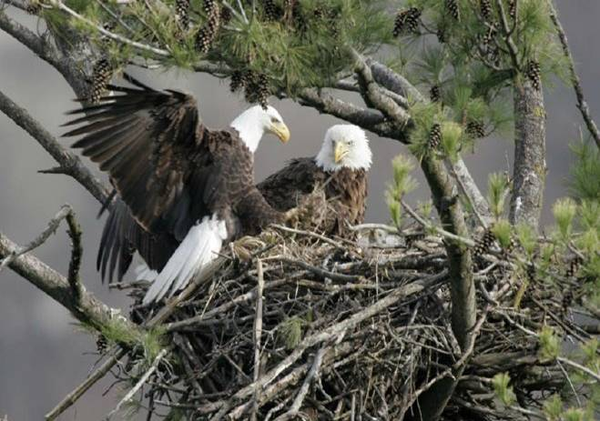 Eagle Pictures Eaglepic Htm
